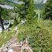 Wunderschöner Abstieg durch das Arvenwäldchen