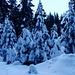 Dans la forêt de Rattenholz