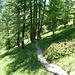 Nun geht es durch Wald zurück nach Arolla!