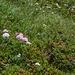 Aktuell hat es eine wunderbare Alpenflora !