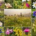 Blumige Collage der Mitgeherin Rebecca. Kann evtl. wer die Monstrositöt rechts unten identifizieren? Evtl. gar eine Orchidee?