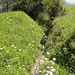 Üppigens Grün an den Wegrändern
