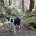 Der Weg führt uns auch durch schattigen Wald
