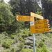 Gruonbergli im Wald. Viele Wege führen nach Eggbergen