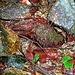 <br />Ich schaute mich um und sah diese Stelle.<br /><br />Die Steine, die Farben und die Blätter erinnerten mich an etwas, <br />das ich schon lange vergessen hatte.<br />______<br />____<br /><br />♩♫♬♪♩...Je vois la vie en rouge<br />♬♫♪♩♩...Tendre comme un roman de Maupassant<br />♫♪♩♫♩...Je passe l'éponge sur ce qui me ronge<br />♫♪♬♩♫...Mes peurs, mes mensonges<br />♬♫♪♩♬...Pour une vie craquante<br />♩♪♫♬♩...Une vie fondante<br />♫♬♩♪♩...D'un rouge amarante<br /><br />(Maurane - Rouge Amarante)<br />[http://www.youtube.com/watch?v=cSjpFC58oEc]<br /><br />☛☛☛☞☞☞☞☞➔➜➧➧➧➧➧➧➧➧➧➧➧➧➧➨➽➽➼➼➼➼➽➽➽➧➟➨➜☞➜➔☞☛➡➠➟➞➝<br />__________________<br />____________<br /><br />_____<br />__