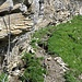 Die Fixseile in der Traverse oberhalb des Hahnenbandes hinüber zum steilen Schlussaufstieg... in dieser Form nicht wirklich hilfreich.
