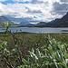 Wunderschöne Szenerie zwischen Alesjaure und Abiskojaure