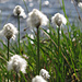 Polarull, meine neue Lieblingspflanze :-)