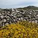 Ajoncs, pierres et, au fond, Garn Fawr