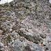 farbenreiche Flechten auf dem rötlichen Ryolith des Donnersberg