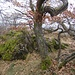 Trockenhabitat mit knorriger Eiche am Hirtenfels