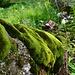 ...und ein bisschen Märchenwald sieht man unterwegs auch