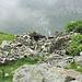 Alpe La Vecchia Inferiore