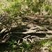 """<br />↻⤻⤼⤻⤼⤺⤽⟳⤾...auf dem Rückweg begegnete ich den sogenannten Schlangenwurzeln. <br /><br />Das hat mich gefreut. <br /><br />Schlangenwurzeln sieht man nämlich selten in dieser Gegend....⟳↻⥀⟳⤼⤻⤼⤺⤽⤺⤽⤾⤿⤺⤽⤼⤻<br />_____________<br />_________________________<br /><br /><br />""""♬♫♩...Wir wollen niemals auseinander gehn...♫♬♩""""<br /><br />(Heidi Brühl)<br />[http://www.youtube.com/watch?v=C3F1_inHijg]<br />______________________________<br />_______________"""