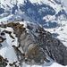 Vorgipfel des Wildhuser Schafbergs. Der drahtseilgesicherte Abstieg zum Hauptgipfel befindet sich rechts der plattigen Felsen