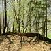 """<br />Auf dem Felsen über den Heidenhäusern von Dongio<br /><br />Die Natur hat den Heiden eine Schutzmauer hingestellt.<br /><br />Dieser Ort ist nur von oben her erreichbar:<br />Indem man vom Wanderweg """"Dongio ➞ Stabbio"""" bei einer LinksKehre (ca. 750m ü.M.) abzweigt <br />und über einen bewaldeten Geländerücken ca. 90m absteigt.<br />_______________<br />_____________________________________<br /><br />(Anna Oxa & Chayanne - Camminando Camminando)<br />[http://www.youtube.com/watch?v=WeQ5YmyirXg]<br />__________<br />_______________"""