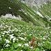 Ein Alpengarten.