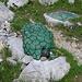 """Im Sommer 2003 haben Markus, Max, Flurina, Livia und Sämi einen Stein, der aussieht wie eine Schildkröte, bemalt und ihn """"Griesstal Schildkröte"""" benannt. Der Stein ist auch 10 Jahre später noch bestens intakt und erfreut die Berggänger."""