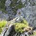 Dieses kleine Kerlchen (Alpenbraunelle?) setzte sich einfach vor uns hin uns besang uns ein paar Minuten....ein Geschenk der Natur!