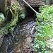 Niedermühle, Mühlgraben (@ BSU II - nasse Füße für den Mountainbiker)