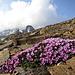 Farbtupfer in der grau-braunen Ödlandschaft auf über 3000 m