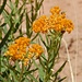 Blumenpracht im Canyonland