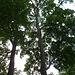 """Dieser hohe Baum kann mit Hilfe einer Seilklemme """"erstiegen"""" werden. Oben hängt für einmal kein Gipfelbuch sondern - eine Hupe"""