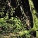 Nahe der Edelfrauengrab-Wasserfälle