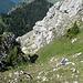 Steiler Schlußaufstieg zur Säulingswiese
