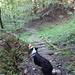 Weiter abwärts durch den Wald