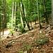 Beim Zustieg durch den Wald