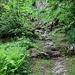hinauf durch Grün und an Felsen vorbei