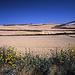 Burgos - Hontanas, 28. Juli: endlose Getreidefelder nach Verlassen der Ortschaft Rabé de las Calzadas. Die Landschaft ist kurz nach Burgos noch hügelig.