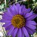 Hochsommerliche Blumenpracht am Weg