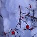 Natur unter der Schneedecke (Foto [U sglider])