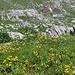 Die etwas versteckt gelegene Alp Grueben.