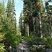 unser Trail führt uns durch malerische Wälder...