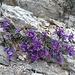 Blumenpracht auf kargem Untergrund