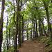 Der Rückweg führt durch schönen Laubwald