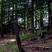 Unten im Wald
