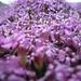Caos di petali e pistilli