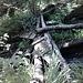 Zerstörter Steg auf der nicht markierten Querverbindung auf ca. 600 m oberhalb von Canei.