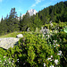 Regliberg, à mi-chemin de la montée à la cabane Salbit : au fond de profil, la fameuse arête sud