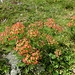 vielfältige Pflanzen am Wegesrand