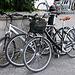 Wir entscheiden uns für eine Tour mit dem Fahrrad, weil unser Zeitbudget durch die Fähre beschränkt ist.
