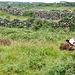 Innerhalb von Steinmauer gibt es auch eine bescheidene Landwirtschaft.