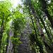Der Aussichtsturm im dichten Grün der weitläufigen Wald- und Parklandschaft um Cong.