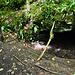 """Hier noch eine weiter kleine Grotte: """"Priests Cave""""."""