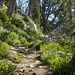 herrlicher Aufstieg auf dem Amphitheater Trail