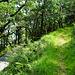 An diesem kleinen Cottage (links) führt ein gut sichtbarer Weg bergauf (rechts).